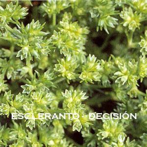 Escleranto-Decisión. Versión Cristal