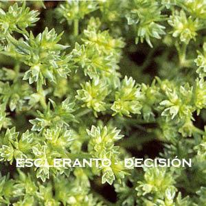 Meditación-Inducción de energía Escleranto-Decisión