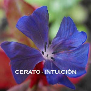 Cerato-Intuición. Versión Cristal