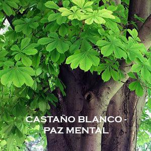 Castaño Blanco-Paz Mental. Versión Cristal