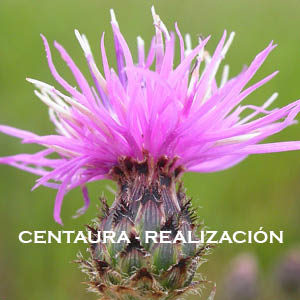Centaura-Realización. Versión Cristal