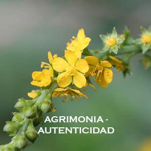 Meditación-Inducción de energía Agrimonia-Autenticidad