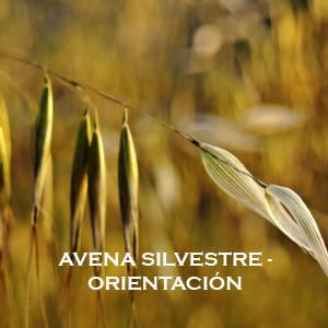 Meditación-Inducción de energía Avena Silvestre-Orientación