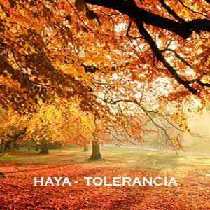 Meditación-Inducción de energía Haya-Tolerancia
