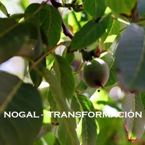 Meditación-Inducción de energía Nogal-Transfofrmación