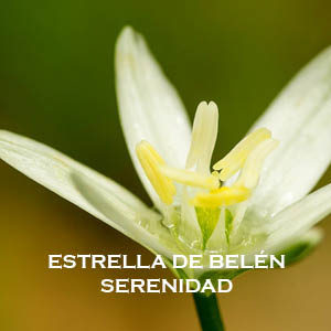 ESTRELLA DE BELÉN-SERENIDAD