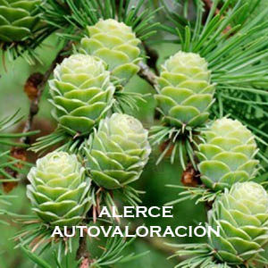 ALERCE-AUTOVALORACIÓN