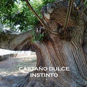 Castaño Dulce-Instinto