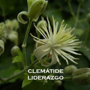 CLEMATIDE-LIDERAZGO