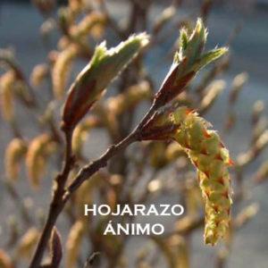 HOJARAZO-ÁNIMO