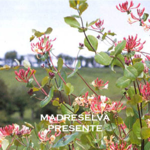 MADRESELVA-PRESENTE