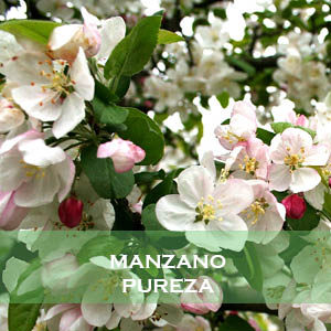 Manzano-Pureza
