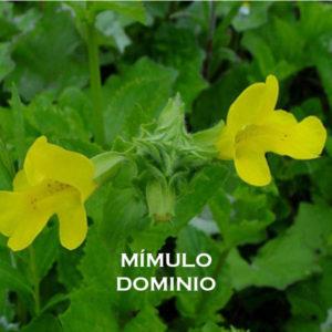 Mímulo-Dominio