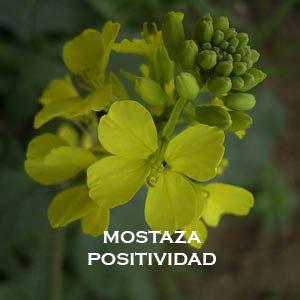 MOSTAZA-POSITIVIDAD