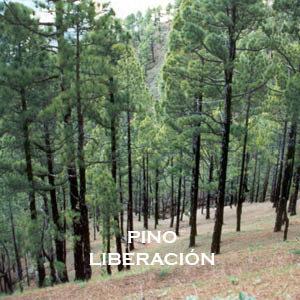 PINO-LIBERACIÓN