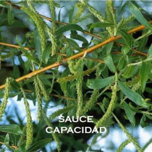 Sauce-Capacidad
