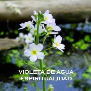 Violeta de Agua-Espiritualidad